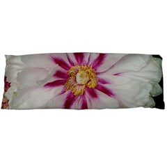 Floral Soft Pink Flower Photography Peony Rose Body Pillow Case (dakimakura) by yoursparklingshop