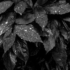 Black And White Leaves Photo Magic Photo Cubes by dflcprintsclothing