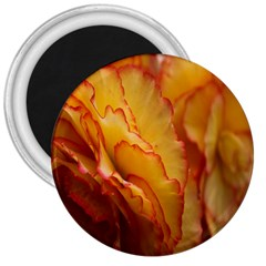 Flowers Leaves Leaf Floral Summer 3  Magnets by Celenk