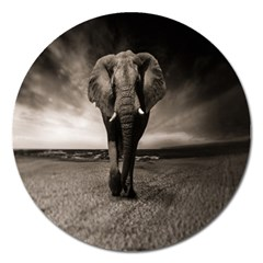 Elephant Black And White Animal Magnet 5  (round)