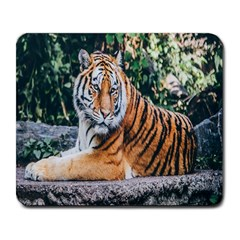 Animal Big Cat Safari Tiger Large Mousepads by Celenk