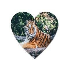 Animal Big Cat Safari Tiger Heart Magnet by Celenk