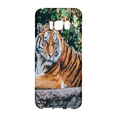Animal Big Cat Safari Tiger Samsung Galaxy S8 Hardshell Case