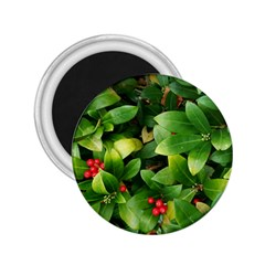 Christmas Season Floral Green Red Skimmia Flower 2 25  Magnets by yoursparklingshop