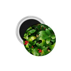 Christmas Season Floral Green Red Skimmia Flower 1 75  Magnets by yoursparklingshop