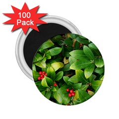 Christmas Season Floral Green Red Skimmia Flower 2 25  Magnets (100 Pack)  by yoursparklingshop