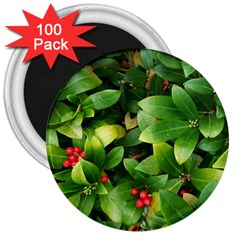 Christmas Season Floral Green Red Skimmia Flower 3  Magnets (100 Pack) by yoursparklingshop
