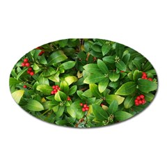 Christmas Season Floral Green Red Skimmia Flower Oval Magnet by yoursparklingshop