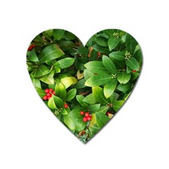 Christmas Season Floral Green Red Skimmia Flower Heart Magnet by yoursparklingshop