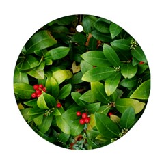 Christmas Season Floral Green Red Skimmia Flower Round Ornament (two Sides) by yoursparklingshop