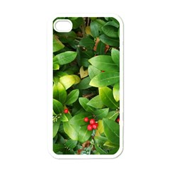 Christmas Season Floral Green Red Skimmia Flower Apple Iphone 4 Case (white) by yoursparklingshop