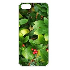 Christmas Season Floral Green Red Skimmia Flower Apple Iphone 5 Seamless Case (white) by yoursparklingshop