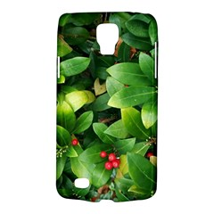 Christmas Season Floral Green Red Skimmia Flower Galaxy S4 Active by yoursparklingshop