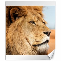 Big Male Lion Looking Right Canvas 20  X 24   by Ucco