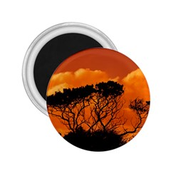 Trees Branches Sunset Sky Clouds 2 25  Magnets by Celenk