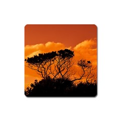 Trees Branches Sunset Sky Clouds Square Magnet by Celenk