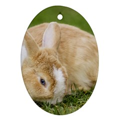 Beautiful Blue Eyed Bunny On Green Grass Ornament (oval) by Ucco