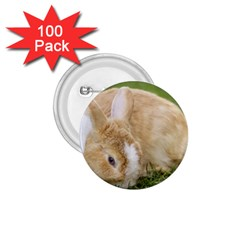 Beautiful Blue Eyed Bunny On Green Grass 1 75  Buttons (100 Pack)  by Ucco