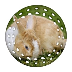 Beautiful Blue Eyed Bunny On Green Grass Ornament (round Filigree) by Ucco