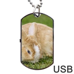 Beautiful Blue Eyed Bunny On Green Grass Dog Tag Usb Flash (one Side) by Ucco