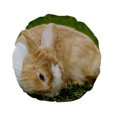 Beautiful Blue Eyed Bunny On Green Grass Standard 15  Premium Round Cushions by Ucco