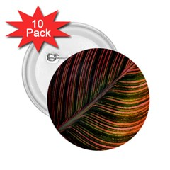 Leaf Colorful Nature Orange Season 2 25  Buttons (10 Pack)