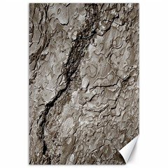 Tree Bark A Canvas 12  X 18   by MoreColorsinLife