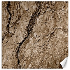Tree Bark B Canvas 12  X 12   by MoreColorsinLife