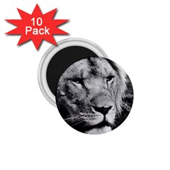 Africa Lion Male Closeup Macro 1 75  Magnets (10 Pack)  by BangZart