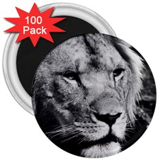 Africa Lion Male Closeup Macro 3  Magnets (100 Pack) by BangZart