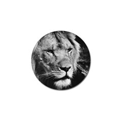 Africa Lion Male Closeup Macro Golf Ball Marker (10 Pack) by BangZart