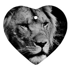 Africa Lion Male Closeup Macro Heart Ornament (two Sides) by BangZart