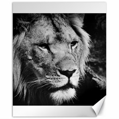 Africa Lion Male Closeup Macro Canvas 16  X 20   by BangZart