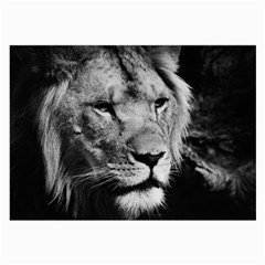 Africa Lion Male Closeup Macro Large Glasses Cloth (2 Side) by BangZart