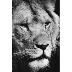 Africa Lion Male Closeup Macro 5 5  X 8 5  Notebooks by BangZart