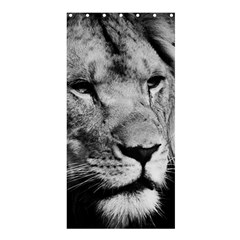 Africa Lion Male Closeup Macro Shower Curtain 36  X 72  (stall)