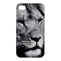 Africa Lion Male Closeup Macro Apple Iphone 4/4s Hardshell Case