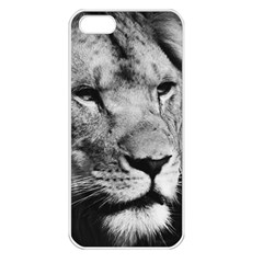 Africa Lion Male Closeup Macro Apple Iphone 5 Seamless Case (white)