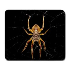 Insect Macro Spider Colombia Large Mousepads