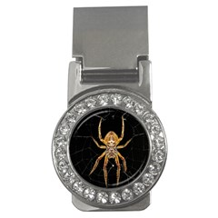 Insect Macro Spider Colombia Money Clips (cz)