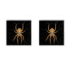 Insect Macro Spider Colombia Cufflinks (square) by BangZart