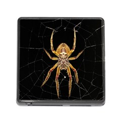 Insect Macro Spider Colombia Memory Card Reader (square) by BangZart