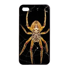 Insect Macro Spider Colombia Apple Iphone 4/4s Seamless Case (black) by BangZart