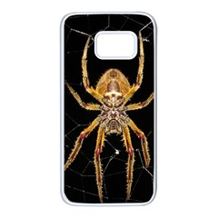 Insect Macro Spider Colombia Samsung Galaxy S7 White Seamless Case by BangZart