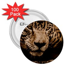 Jaguar Water Stalking Eyes 2 25  Buttons (100 Pack)