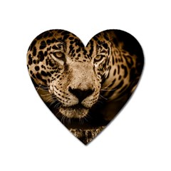 Jaguar Water Stalking Eyes Heart Magnet by BangZart
