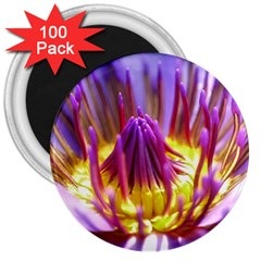 Flower Blossom Bloom Nature 3  Magnets (100 Pack) by BangZart