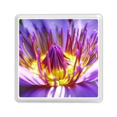 Flower Blossom Bloom Nature Memory Card Reader (square)