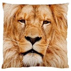 Africa African Animal Cat Close Up Standard Flano Cushion Case (one Side) by BangZart