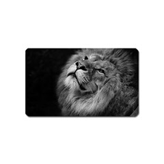 Feline Lion Tawny African Zoo Magnet (name Card)